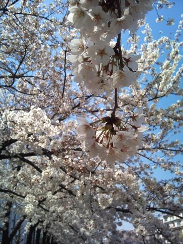 2012-04-08 mini.jpg